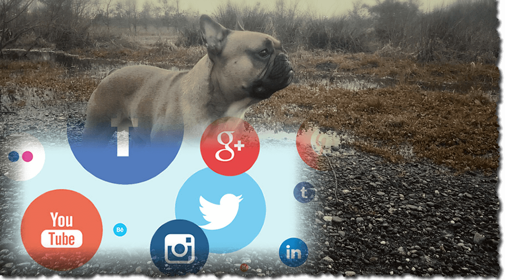 Max de Franse Bulldog op social media
