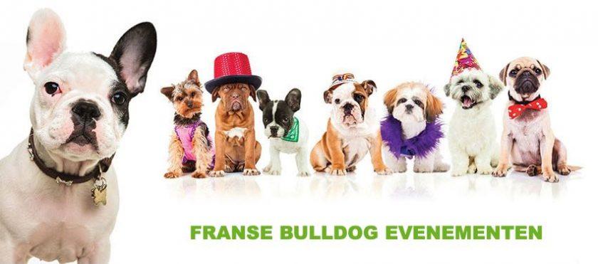 Wandelen en evenementen voor jouw Franse Bulldog